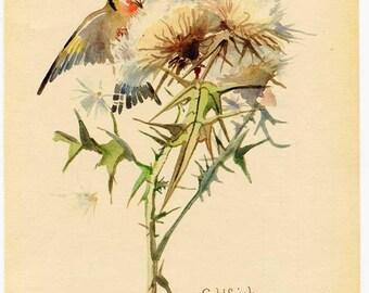 Vintage Nature Scene, Botanical,  Bookplate Illustration, Print for Framing, Goldfinch Bird, Thistle Plant, Nature in Autumn Scene