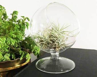 Brandy Glass Planter / Clear Glass Planter / Succulent Glass Planter / Air Fern Planter / Mini Terrarium / Round Terrarium / Mini Vase