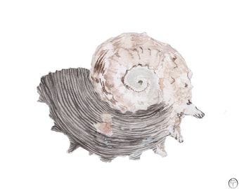 Spiral Seashell, watercolor painting, art print, nautical print, beach decor, coastal, gift for her