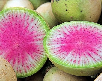 Watermelon Red Meat Radish Heirloom Garden Seed Non GMO 100+ Seeds Unique Open Pollinated Naturally Grown Gardening