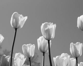 Black and White Tulip Print