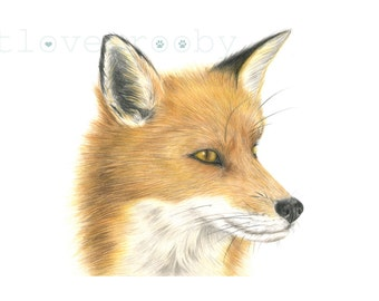 Fox giclee print/ Fox print/ fox coloured pencil drawing