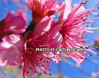 Digital Download, Pink flowers against a blue sky, Wall art