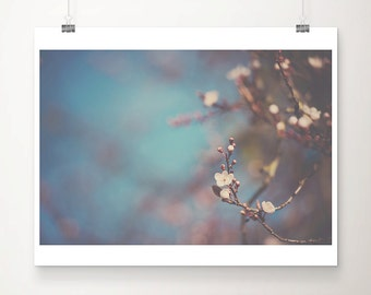 apple blossom photograph blossom tree photograph flower photograph apple blossom print blossom tree print nature photography