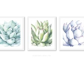 Succulent Wall Art, Plant Art, Cactus Print, Succulent Art Print - cactus wall art - succulent watercolor art - Set of 3 Prints