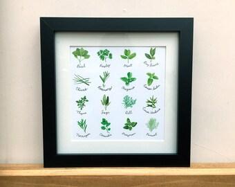 Garden herbs, kitchen wall print, 8x8 inches.