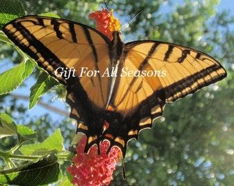 Swallowtail Butterfly on Pink Lantana-5 x 7 Original Photograph-Summer In Colorado-Nature's Art