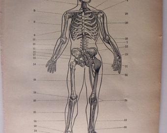 original page - 1905 MEDICAL CHART from antique medical book - skeleton