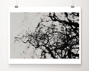 black and white photography nature photography tree photograph surreal print tree print abstract art dark photography dark art