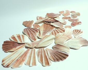 Gorgeous Pink Seashells fragments from Mediterranean sea / for jewelry making or any project Lot of 42 / S24