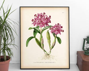 Orchid print, Flower wall art, Large flower print, 8x10, 11x14, 16x20 print, Orchid wall art, Flower print vintage, Instant download art