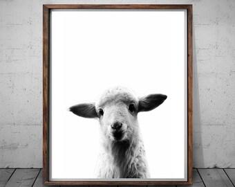 Lamb Print, Black and White Wall Art, Lamb Photo, Digital Download Photography, Lamb Photography, Lamb Art, Lamb Printable, Lamb Art Photos