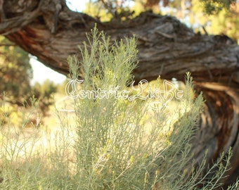 Fine Art Nature Photo Prints, Canvas and Wall Decorations