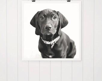 Black dog print, puppy photo, dog photography dog print, dog picture, black dog art, puppy art, home decor, wall decor, wall art, rescue dog