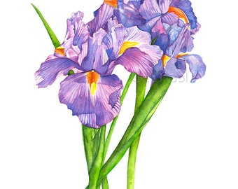 Irises print of watercolour painting. I17617, 5 by 7 size print, Irises painting, Irises watercolor print, Irises print, Iris watercolor