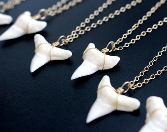Wicked Shark Tooth Necklace, Dainty Gold Necklace, Genuine Shark Tooth Necklace, Real Shark Tooth Charm, Gold Wrapped Shark Tooth Jewelry