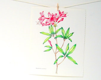 Flower Print - Purple Rhododendron - 1989 Vintage Page 10 x 8