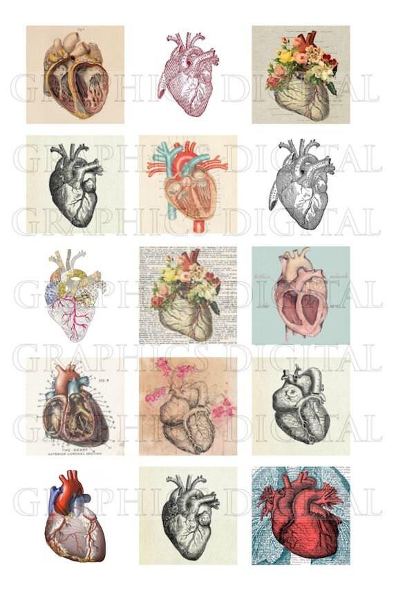 Dibujos anatómicos de anatomía de corazón anatómico corazones