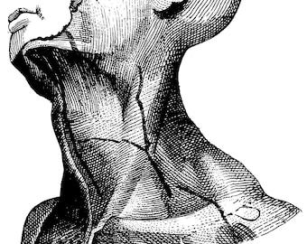 Anatomical, Anatomical anatomy, Anatomical poster, Medical decor, Human anatomy, Medicine, Anatomy art, 132