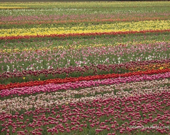 Flower Photography ~ Tulip Field Photo ~  Spring Decor  ~  Floral Print ~ Pink Yellow Green Red Wall Art ~ Colorful Stripes, Field of Tulips