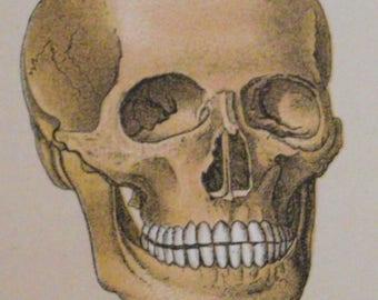 """Piezas antiguas 1901 mano esqueleto humano color litografía 10 """"x 7"""" fetiche médico primitivo pared rústica anatomía arte ilustración"""