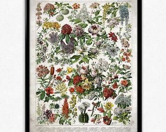 French Flowers Fleurs Vintage Print 1 - Flower Poster - Flower Art - Flower Picture - Home Decor - Living Room - Living Room Art (VP1039)