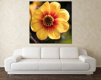 Flower Art canvas Print, Square Flower Canvas, Daisy picture, large canvas wall art, flower photography print, Yellow flower
