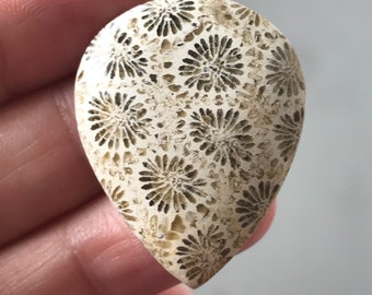 Beautiful Fossil Coral Stone 25 x 32 mm