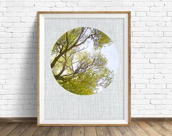 "nature photography, large art, large wall art, printable art, instant download printable art, nature prints, wall art prints, art - ""Canopy"""