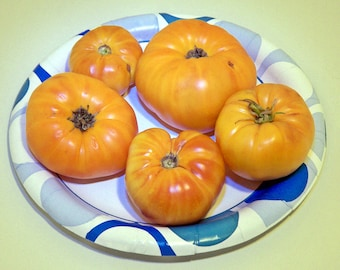 Summer Cider Tomato Heirloom Garden Seed Rare Non-GMO 30+ Seeds Naturally Grown Open Pollinated Gardening