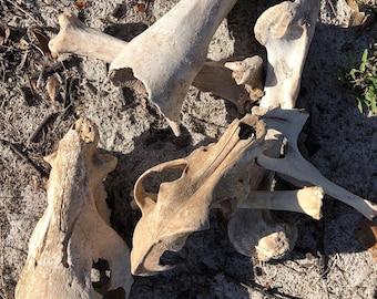 Desert Bones and Skulls