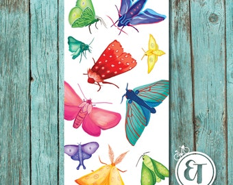 Bright Moth 1