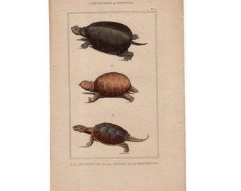 1830 ANTIQUE TORTOISE ENGRAVING original antique hand colored print reptile turtle turtles - brown