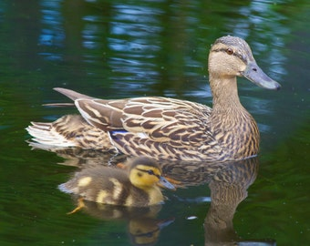 Swimming Together with Mom