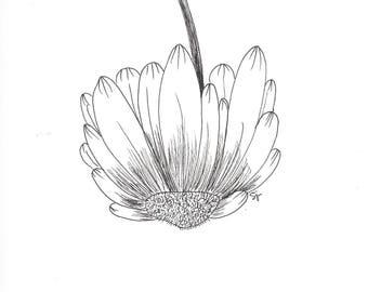 Ink drawing, sunflower art, flower art