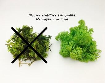 Stabilized Moss, moss green, Moss, dried, terrarium, reindeer Moss, stabilized Moss, terrarium kit, lichen