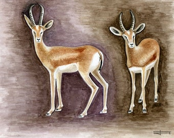 Reproduction of my unique and original watercolor: Dorcas Gazelle.