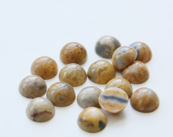 12 Pieces Natural Mexican Crazy Lace Stone Cabochons-8mm (08MEXC) (B-5-17)
