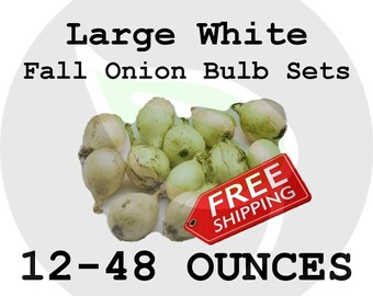 Fall Winter LARGE Onion Bulb Sets (Choice White) - Organically Grown Seed Onions, Non-GMO - Free Shipping!