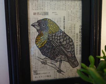 Framed illustration of a grenadier ink bird