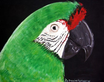 "Severe Macaw Oil Painting Large Oringinal 16"" x 20"" on 100% Cotton Duck stretched Canvas by Douglas A Rohloff"