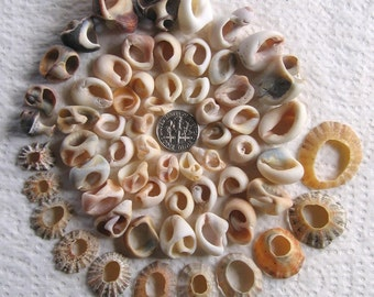 61 Sea Shells Natural Holes Jewelry Supplies (1727)