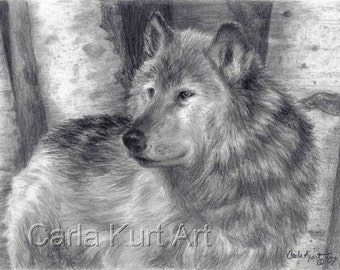 ORIGINAL drawing Wolf Number 6 by Carla Kurt