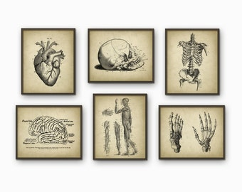 Human Anatomy Antique Art Print Set of 6 - Vintage Anatomy Home Decor - Antique Book Plate - Medical Student Gift Idea Picture Set of 6