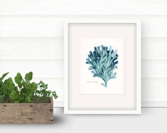 Coastal Decor Pacific Sea Kelp Natural History Giclee Art Print No. 2 8x10 tide pool