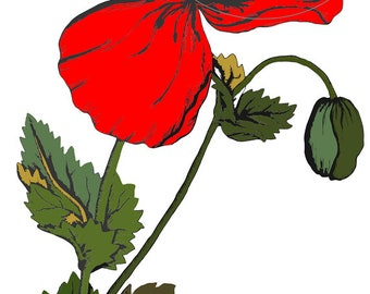 Poppy Clipart Vintage Botanical Clipart Poppy Flowers Red Poppies Digital Clipart