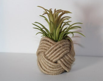 Nautical Knot Holder with Air Plant (Ionantha Mexicana)