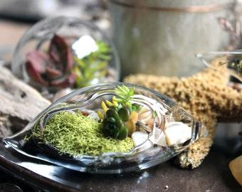 20 Succulent Terrarium wedding favors beach themed