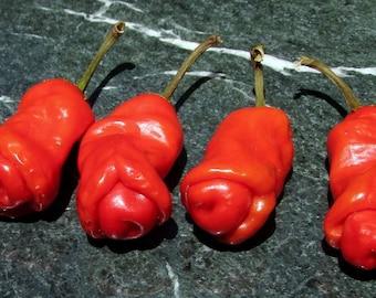 Peter Red Pepper, hot, heirloom ornamental pepper seeds