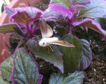 Needle felted moth in motion with real moth wings.